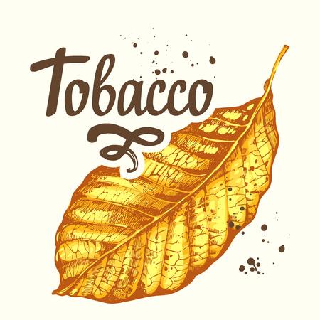 Vektorillustration mit Tabakgelb getrocknetem Blatt im Skizzenstil. Alte klassische Tradition des Rauchens. Schriftzug Design. Vektorgrafik