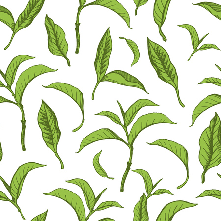 Vector beautiful illustration with pattern of green tea leaves. Seamless background.
