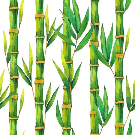 Bamboo branch with leaves. Stockfoto