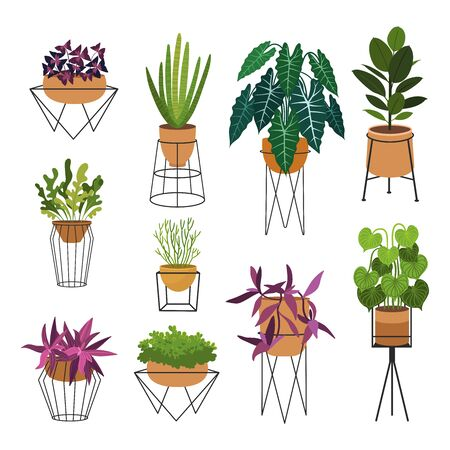 Indoor plants flat color illustrations set. Realistic houseplants in beige pot on metal stands. Exotic flowers with stems and leaves. Ficus, snake plant, sansevieria isolated botanical design element Stock Vector - 134064404