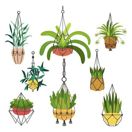 Indoor plants flat color illustrations set. Realistic houseplants in beige pot on metal stands. Exotic flowers with stems and leaves. Ficus, snake plant, sansevieria isolated botanical design element Stock Vector - 134064410