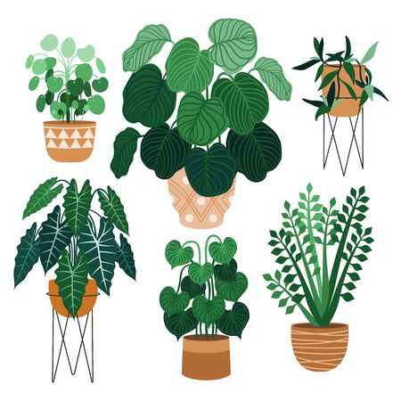 Indoor plants flat color illustrations set. Realistic houseplants in beige pot on metal stands. Exotic flowers with stems and leaves. Ficus, snake plant, sansevieria isolated botanical design element Stock Vector - 135117157