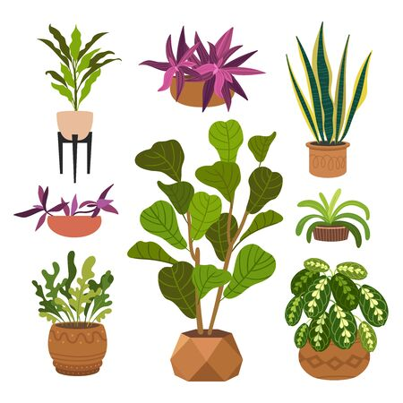Indoor plants flat color illustrations set. Realistic houseplants in beige pot on metal stands. Exotic flowers with stems and leaves. Ficus, snake plant, sansevieria isolated botanical design element Stock Vector - 134417487