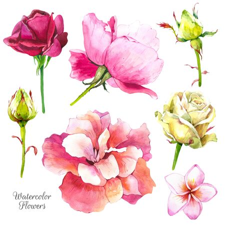 Botanical illustration with tropical plants. Watercolor set of green leaves and flowers: hibiscus, rose. Handmade painting realistic watercolor cliparts.