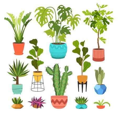 Indoor plants flat color illustrations set. Realistic houseplants in beige pot on metal stands. Exotic flowers with stems and leaves. Ficus, snake plant, sansevieria isolated botanical design element Stock Vector - 145854322