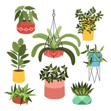 Indoor plants flat color illustrations set. Realistic houseplants in beige pot on metal stands. Exotic flowers with stems and leaves. Ficus, snake plant, sansevieria isolated botanical design element Stock Vector - 145854323