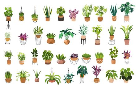 Indoor plants flat color illustrations set. Realistic houseplants in beige pot on metal stands. Exotic flowers with stems and leaves. Ficus, snake plant, sansevieria isolated botanical design element