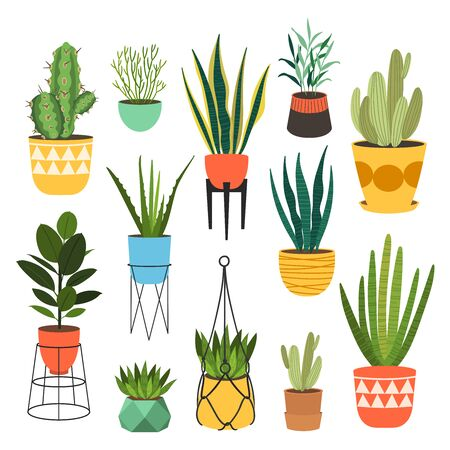 Indoor plants flat color illustrations set. Realistic houseplants in beige pot on metal stands. Exotic flowers with stems and leaves. Ficus, snake plant, sansevieria isolated botanical design element Stock Vector - 145854333
