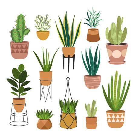 Indoor plants flat color illustrations set. Realistic houseplants in beige pot on metal stands. Exotic flowers with stems and leaves. Ficus, snake plant, sansevieria isolated botanical design element Stock Vector - 145854335