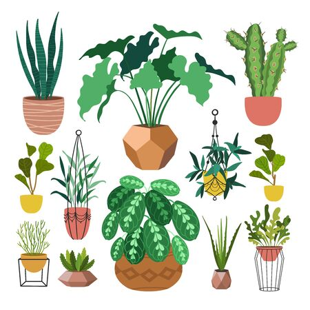 Indoor plants flat color illustrations set. Realistic houseplants in beige pot on metal stands. Exotic flowers with stems and leaves. Ficus, snake plant, sansevieria isolated botanical design element Stock Vector - 145854341