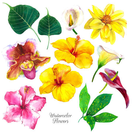 Exotic flowers watercolor illustrations set. Hibiscus, orchid, dahlia, floral sketch. Tropical blossom, leaves realistic watercolor cliparts. Calla lily with aquarelle texture. Postcard design Standard-Bild