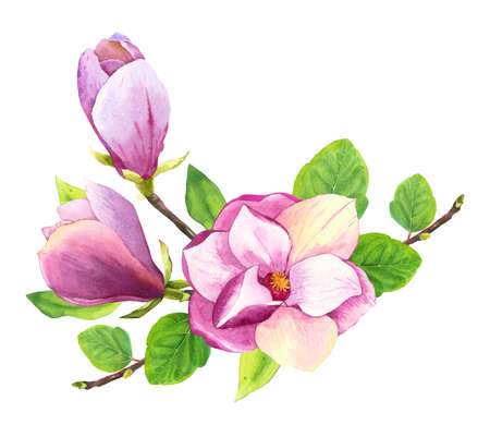 Spring composition with watercolor magnolia. Floral purple illustrations with realistic flowers on white background for your design and decor. Archivio Fotografico - 158648177