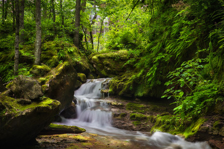 waterfall. Mountain waterfall in the forest with ferns. photo