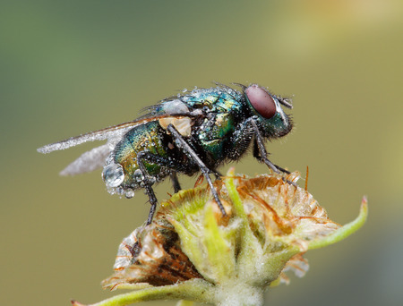 ugliness: green fly on a flower Stock Photo