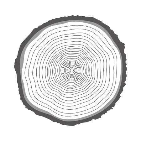 cross section of tree: Tree rings illustration. Vector illustration.