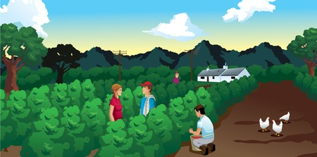 coffee harvest field with house and mountains vector illustration