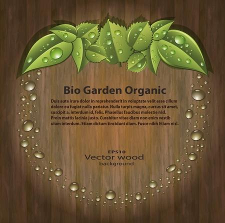 Bio garden organic aple drops vector background Wood