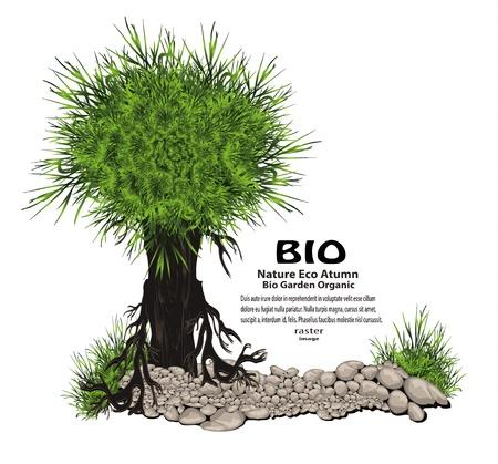 sauce: Árbol de piedra verde hierba naturaleza