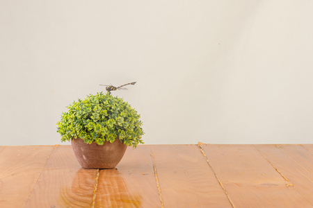 Dragonfly on decoration plant on wooden table on white background