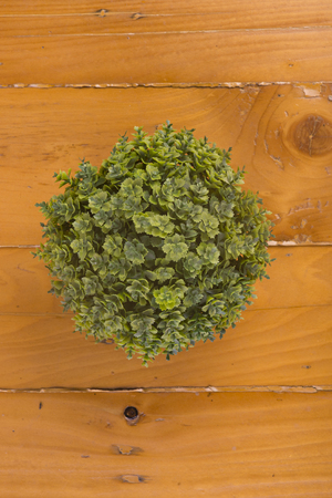 Top view decorate plant on wooden