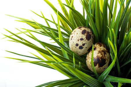 흰색 배경에 고립 된 녹색 잔디에 메 추 라 기 계란 스톡 콘텐츠 - 26502792