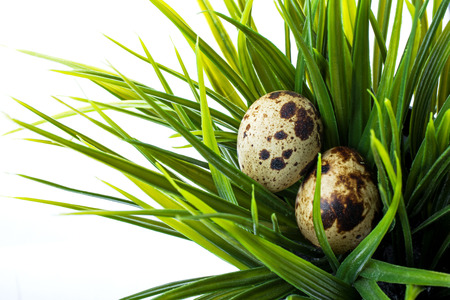 quail eggs in green grass isolated on white background