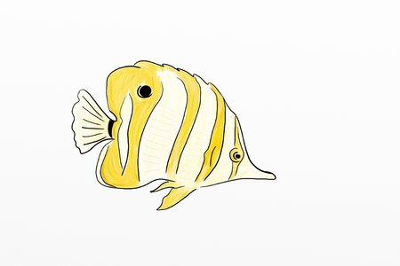 chaetodontidae: Yellow Tropical Fish Drawing