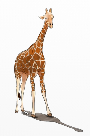 Hand Drawn Young Giraffe