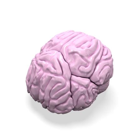 pons: 3d human brain