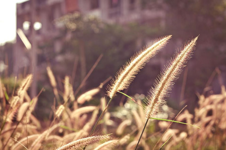 evenings: Top grass and light evenings in the summer. Stock Photo