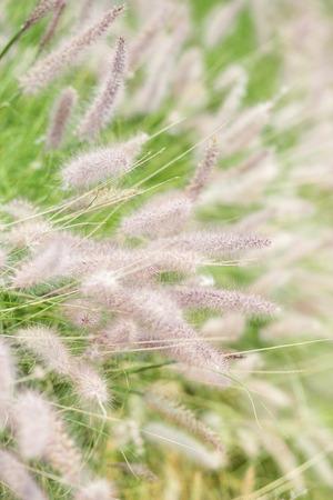 meadow flower in the winter 免版税图像