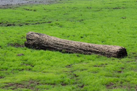 Long Log on green grass