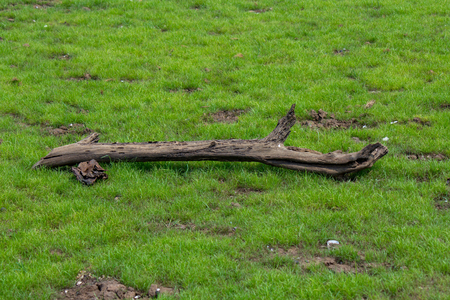 Timber on grass Stock Photo