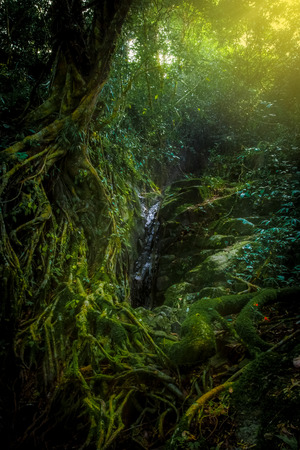 tall tree and root in the forest. small waterfall.