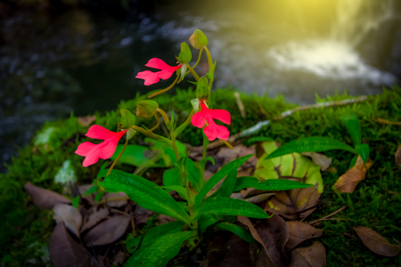 red flower on grass or rock nearby area waterfall in the forest. 免版税图像