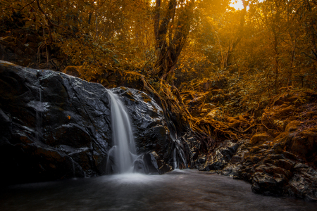 small waterfall in the forest and tall tree. 免版税图像