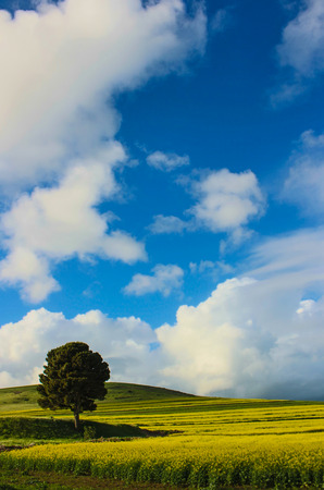 serine: Serine Scene with clouds and tree