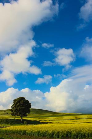 serine: Serine Scene with clouds and tree