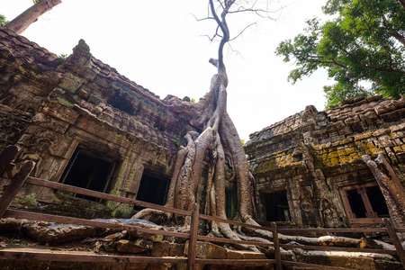 Banyan tree root covering stone prasat Ta Prohm in Angkor thom, The big huge roots above the construction at Angkor wat Siem Reap, Cambodia Banque d'images