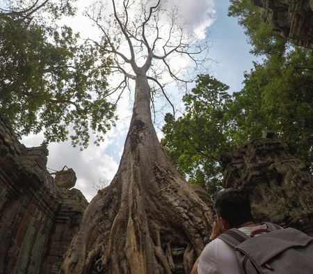 Man and Big Full Banyan tree root covering stone prasat Ta Prohm in Angkor thom, The big huge roots above the construction at Angkor wat Siem Reap, Cambodia Banque d'images