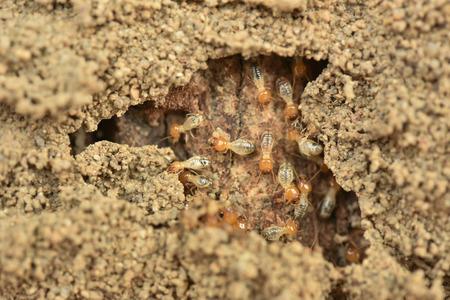 termite Stockfoto