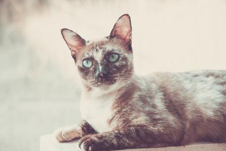 Grey cat looking to wonder.