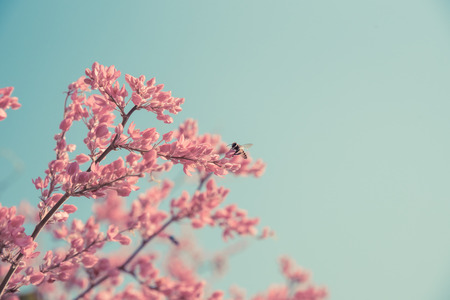 Spring pink blossom and bee in nature.