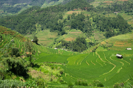 Agriculture Green Rice fields and rice terraced on mountain at SAPA, Lao Cai, Mu Cang Chai, Vietnam. The most of area is rice terraced. nature and landscape rice fields