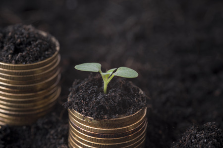 Seeding Plant seed growing on pile of coins money. concept finance investment.
