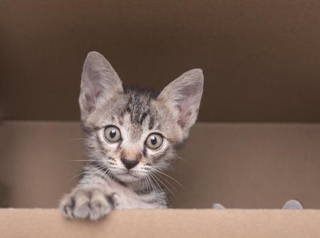 Schneiden Sie kleine Kätzchen auf Karton klettern. Standard-Bild - 81866897