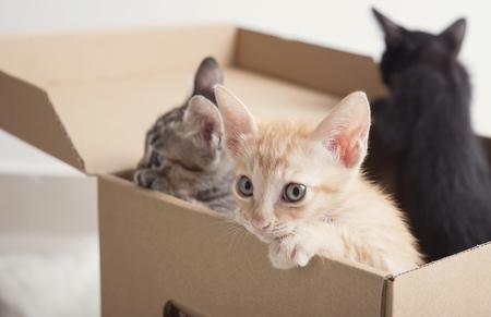 Cut little kitten climb on paper box. Standard-Bild - 103989635
