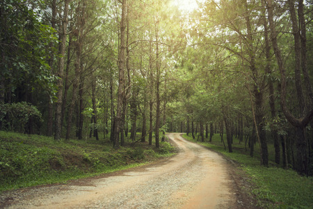 country road and journey way of traveller to the nature in the mountain and the forest. Banco de Imagens