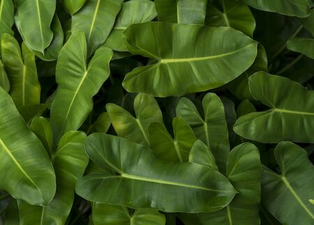 Green tropical leaves pattern background, Natural background and wallpaper. Фото со стока