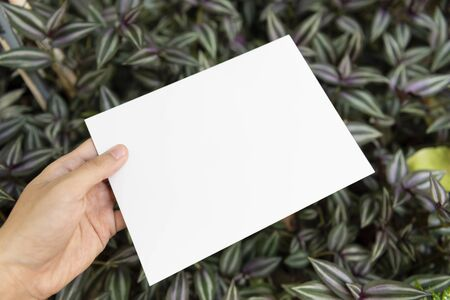 Hand holding white paper on green leaf nature for mockup design text advertising. Stock fotó - 147704952